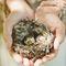 Перепелиное гнездо с кольцами