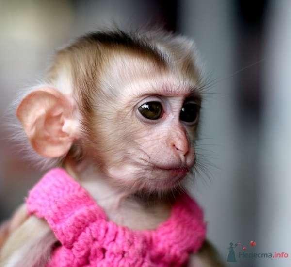 По восточному гороскопу обезьянка - фото 32453 ОЛИК