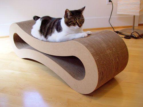 """Хотим завести кошку, хотя животных никогда не было, даже хомячка. С чего начать-то? С поиска кошки? : 145 сообщений : """"Поговорим"""