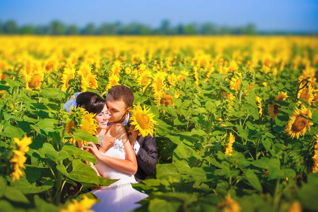 Жених и невеста, прислонившись друг к другу, стоят посреди поля подсолнухов - фото 3467707 Фотограф Максим Мотенко