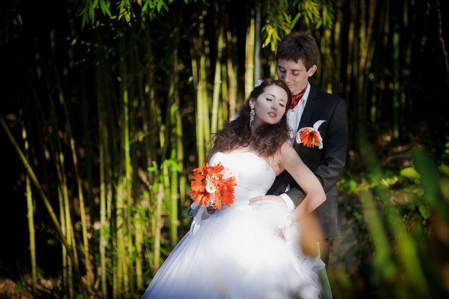 Фото 3600319 в коллекции свадьба 2 - Видеосъемка Сочифильм