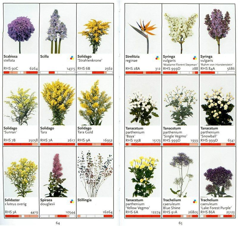 мемориальный комплекс цветы срезка названия с картинками приятно, когда