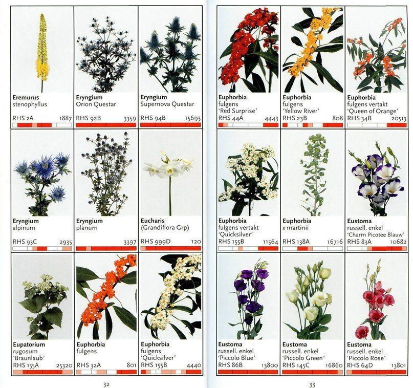 Цветы срезка названия с картинками