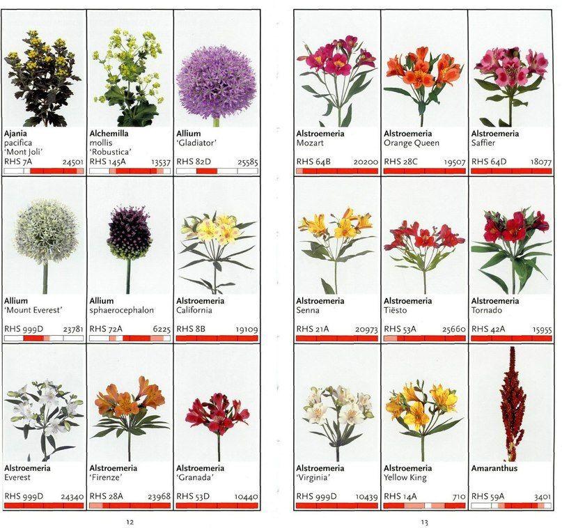 эффективны цветы срезка названия с картинками луговой