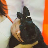 Кролика окольцевали))