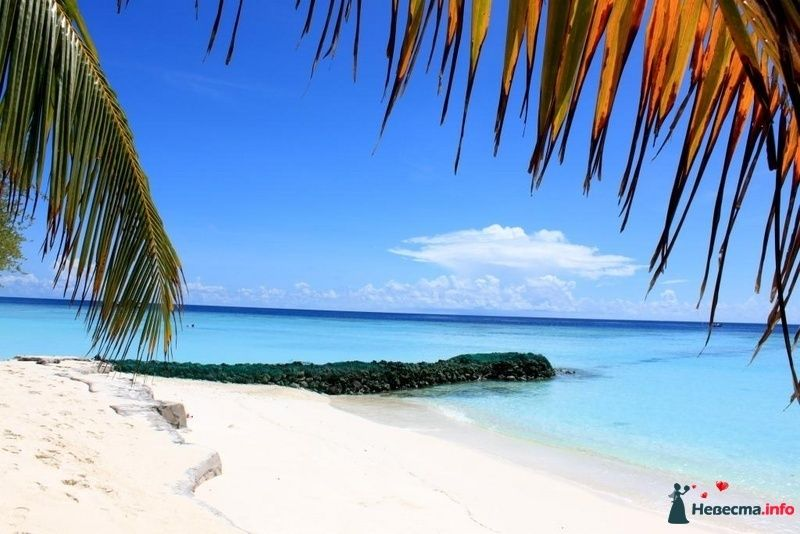 Фото 104331 в коллекции Мальдивы  -  идеальное место для медового месяца. - barbie