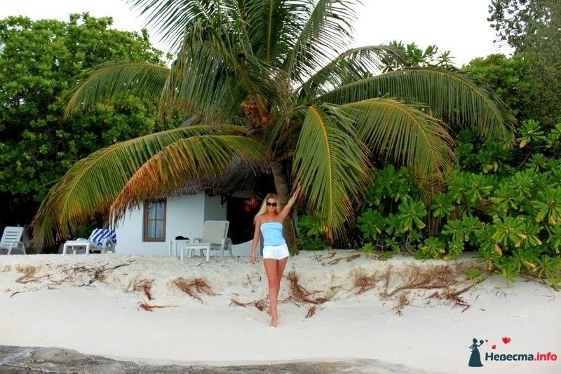 Фото 104725 в коллекции Мальдивы  -  идеальное место для медового месяца. - barbie