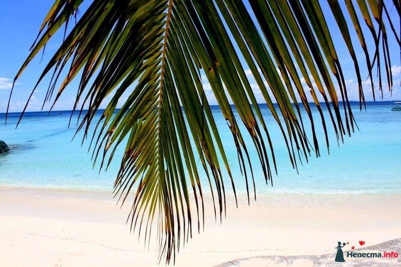 Фото 104732 в коллекции Мальдивы  -  идеальное место для медового месяца. - barbie