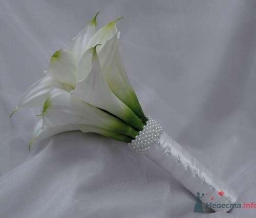 Белые каллы - фото 437 Florina