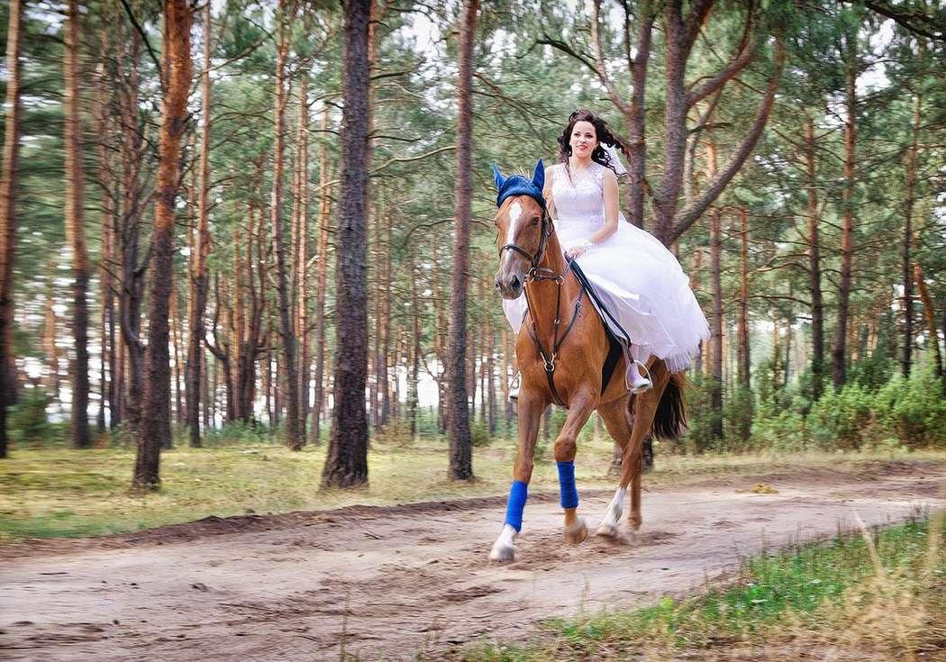 Фото 4271919 в коллекции Свадебная съемка - Фотограф Надежда Горох