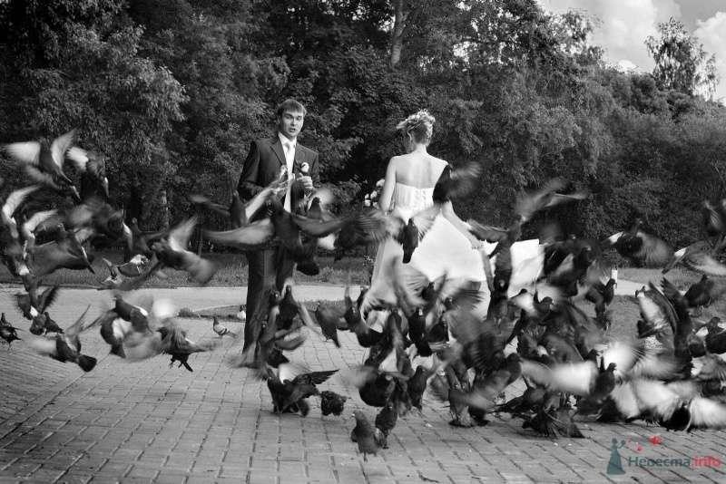 Любовь и голуби - фото 26081 Фотограф Ирина Бруй