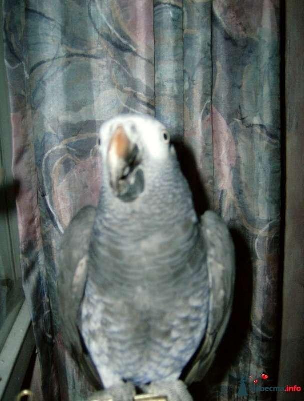 Фото 99968 в коллекции Мои фотографии - Sowl