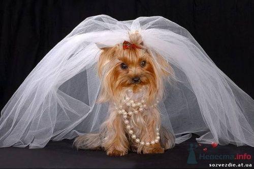 Фото 5463 в коллекции Свадебные курьезы