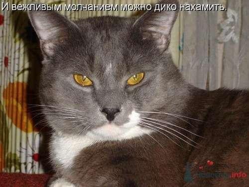 Фото 9345 в коллекции Свадебная суета - leshechka