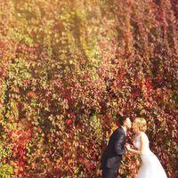 осенняя фотосессия, солнце, золотая осень