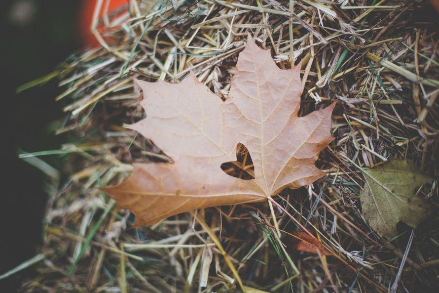"""Фото 8040878 в коллекции Осенняя фотозона - """"Важный день"""" - декор и флористика"""