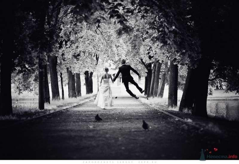 Свадебный фотограф Запорожец Сергей - фото 32066 Фотограф Запорожец Сергей