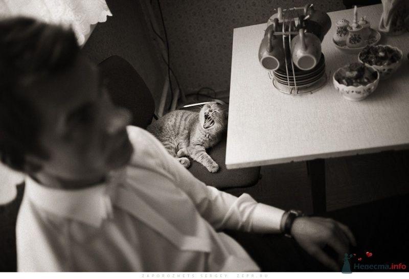Свадебный фотограф Запорожец Сергей - фото 37103 Фотограф Запорожец Сергей