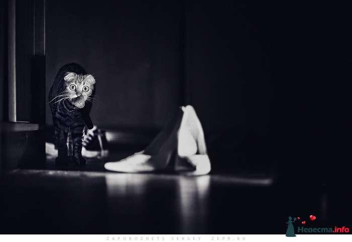 Фото 81315 в коллекции Новая свадебная фотография / Запорожец Сергей - Фотограф Запорожец Сергей