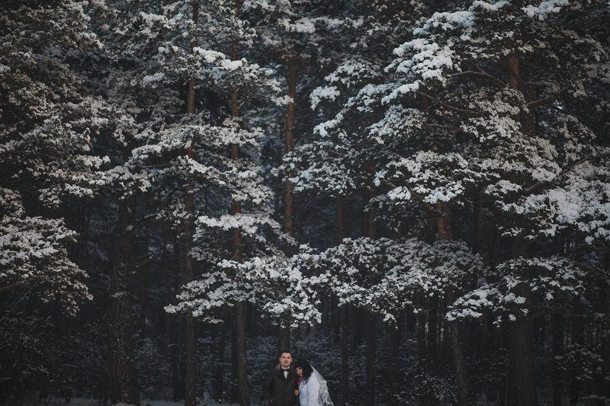 Фото 8646920 в коллекции Портфолио - Свадебный фотограф Дмитрий Кох