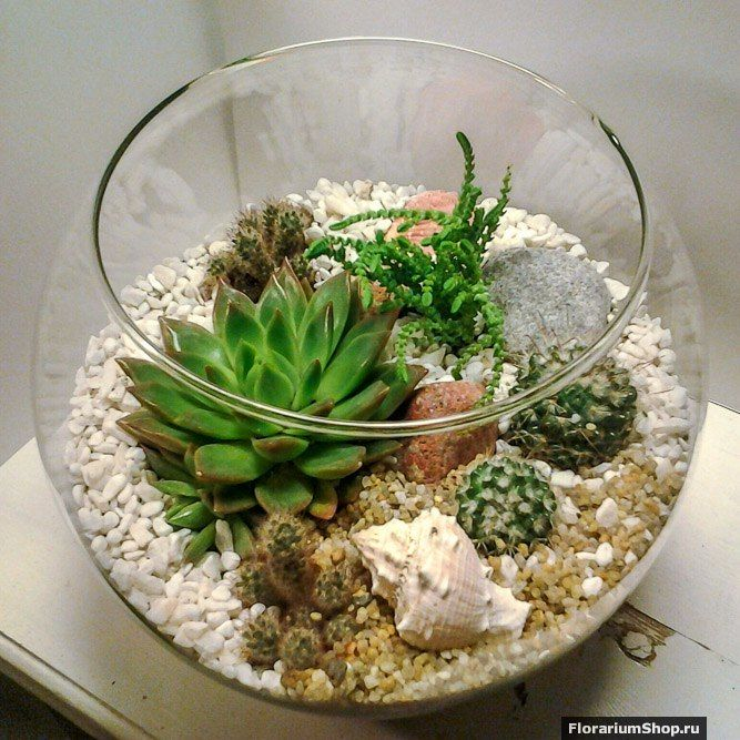 Флорариум Шар 22 см «Море» с суккулентами (ваза 4 л, ⌀22 см)   #10 - фото 9450242 Мастерская флорариумов Юлии Шумилкиной