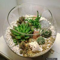 Флорариум Шар 22 см «Море» с суккулентами (ваза 4 л, ⌀22 см)   #10