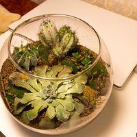 Флорариум Шар 22 см «Лес» с суккулентами (ваза 4 л, ⌀22 см)   #13