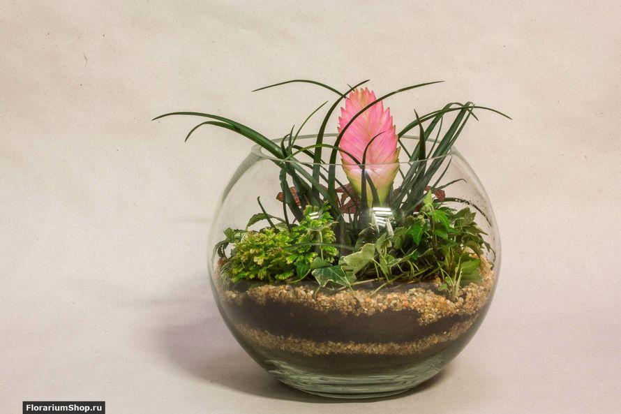 Шар 25 см «Тропический лес» с тилландсией (ваза 7,5 л, ⌀25 см)   #26 - фото 9450266 Мастерская флорариумов Юлии Шумилкиной