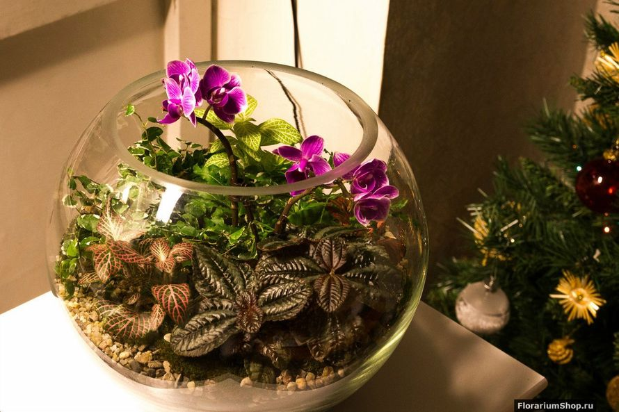 Шар 25 см «Тропический лес» с мини-орхидеями (ваза 7,5 л, ⌀25 см)   #16 - фото 9450288 Мастерская флорариумов Юлии Шумилкиной
