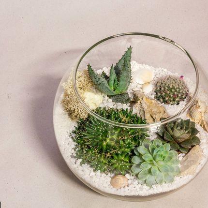 Флорариум с суккулентами «Море», шар 22 см