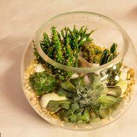 Флорариум Шар 25 см «Море» с суккулентами (ваза 7,5 л, ⌀25 см)   #23