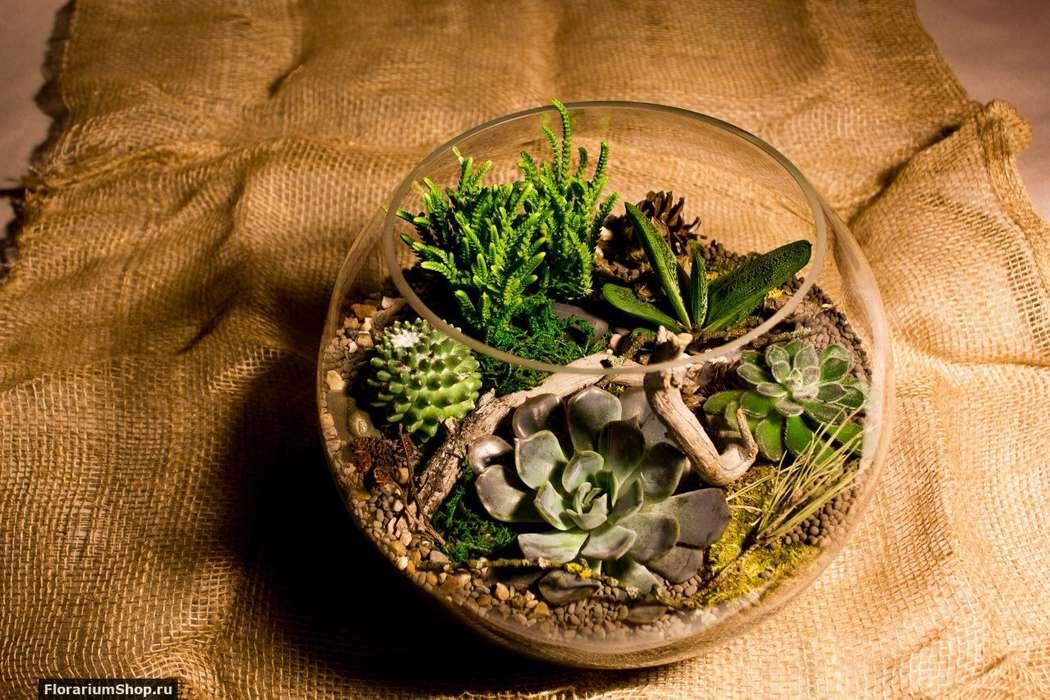 Флорариум Шар 25 см «Лес» с суккулентами (ваза 7,5 л, ⌀25 см)   #27 - фото 9450310 Мастерская флорариумов Юлии Шумилкиной
