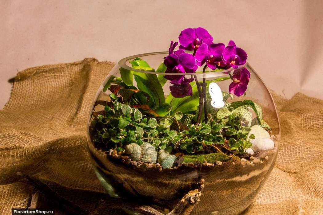 Шар 25 см «Тропический лес» с мини-орхидеями (ваза 7,5 л, ⌀25 см)   #31 - фото 9627924 Мастерская флорариумов Юлии Шумилкиной