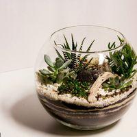 Флорариум Шар 22 см «Море» с суккулентами (ваза 4 л, ⌀22 см)   #29