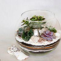 Флорариум Шар 22 см «Море» с суккулентами (ваза 4 л, ⌀22 см)   #36