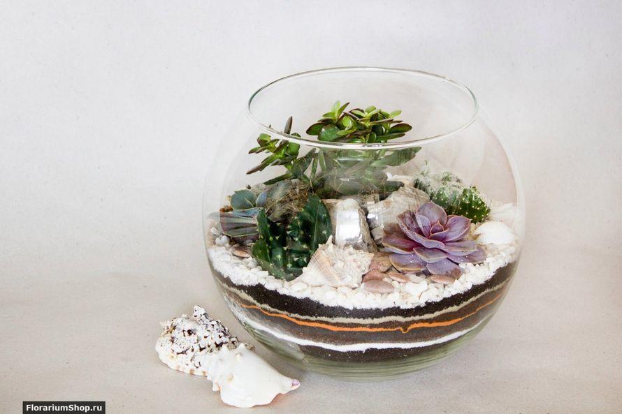 Флорариум Шар 22 см «Море» с суккулентами (ваза 4 л, ⌀22 см)   #36 - фото 9876036 Мастерская флорариумов Юлии Шумилкиной