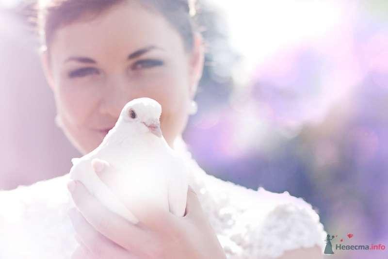 Фото 57905 в коллекции Свадебные фотографии - Фотограф Мария Ширяева (KAIOSHK)