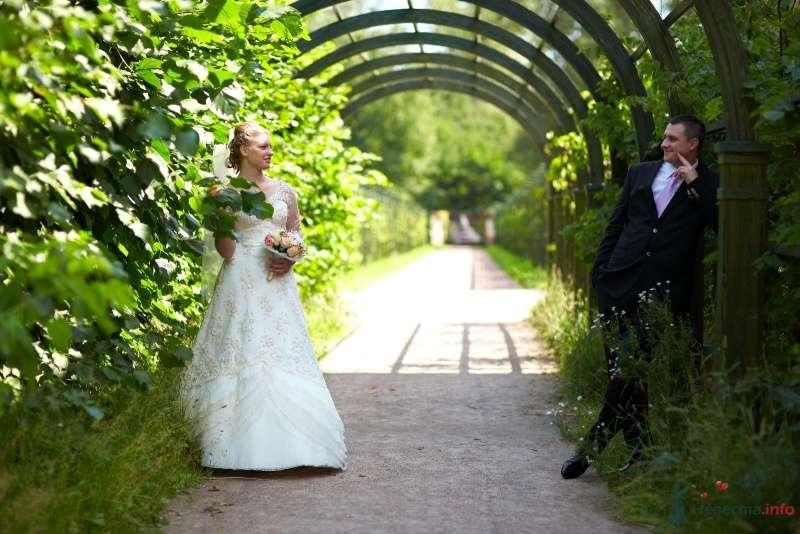 Жених и невеста стоят под арками возле зеленых кустов - фото 34643 кАтенок24