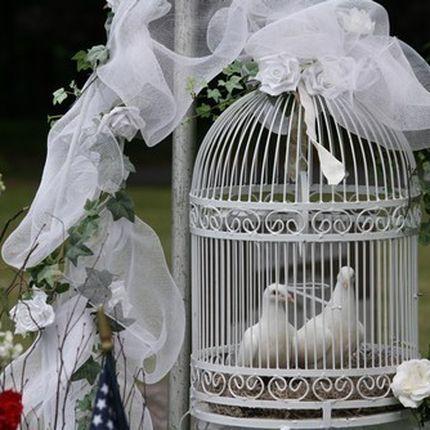 Голуби для выпуска на свадьбе