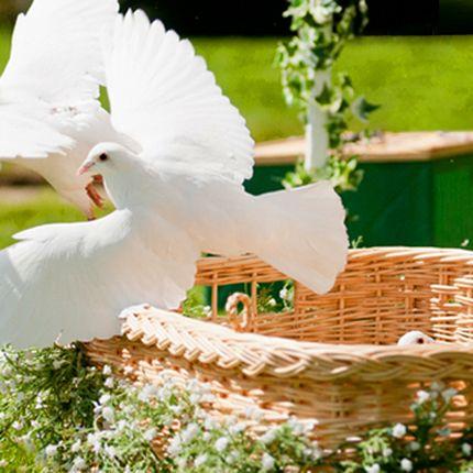 Голуби в корзине для свадьбы