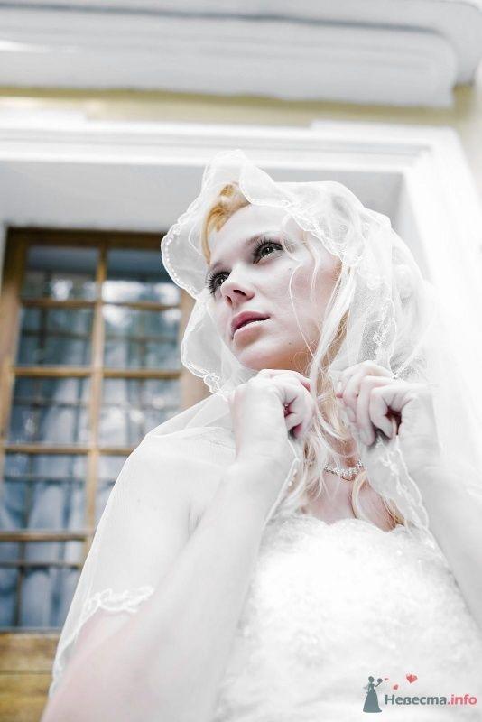 Фото 50703 в коллекции Свадьба - Kolibri