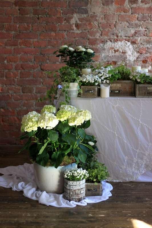 Композиции из живых растений - фото 14361124 Студия цветов и декора Aster