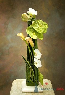 Фото 51876 в коллекции Цвяточки!  - Вашкетова Юлия - организатор свадеб, флорист.