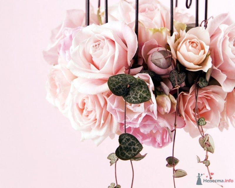 Фото 61064 в коллекции Мои фотографии - Вашкетова Юлия - организатор свадеб, флорист.