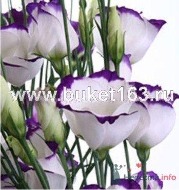 вот цветы моей мечты! - фото 37601 Лайла
