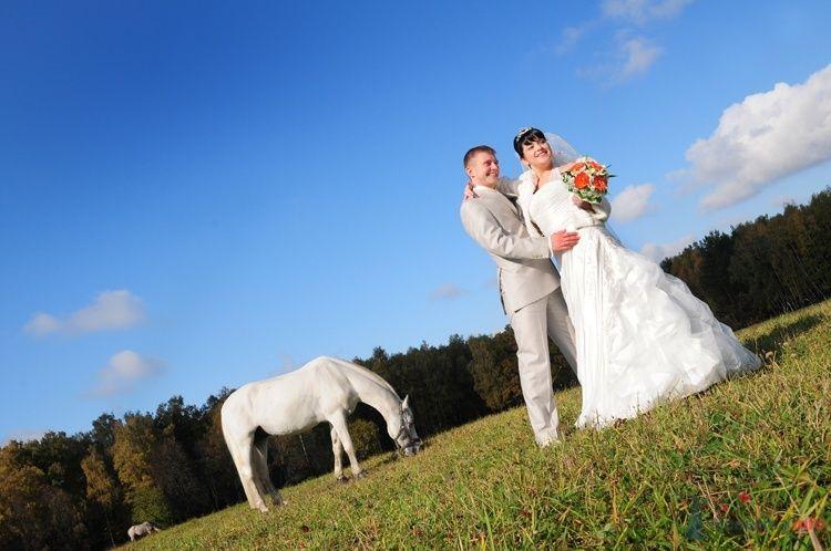 Жених и невеста стоят, прислонившись друг к другу, в поле где пасется - фото 48248 Евгения2009