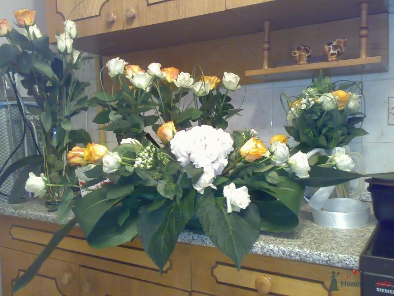 Фото 43043 в коллекции Про цветы - Jabberwokky