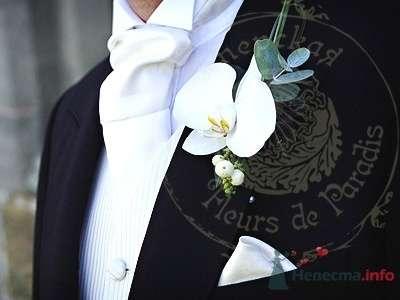 Фото 51107 в коллекции Цветы на свадьбе - Лися