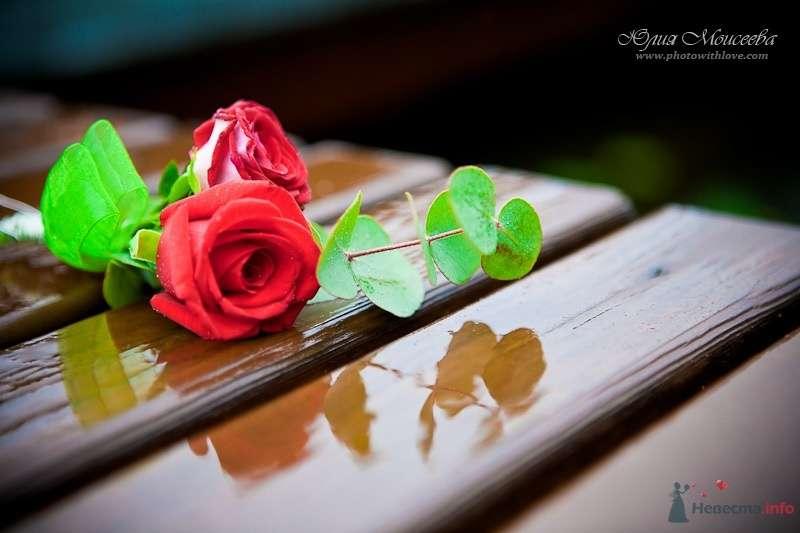 """Фото 61584 в коллекции Свадьба на воде в яхт-клубе """"Нептун"""" - Свадебный фотограф Моисеева Юлия"""