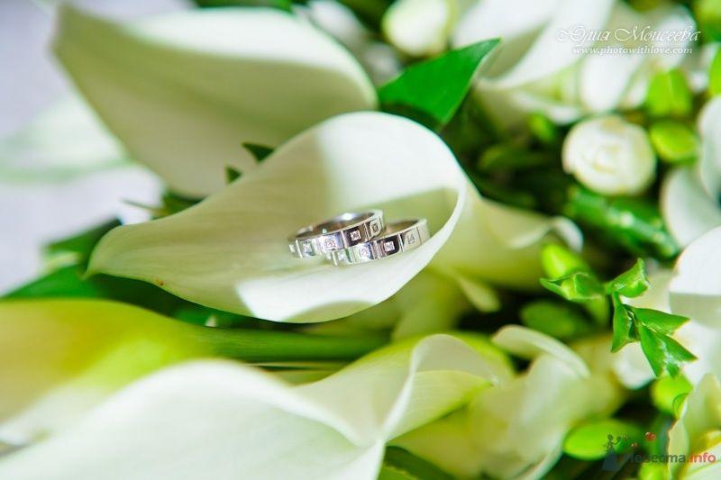 обручальные кольца - фото 62580 Свадебный фотограф Моисеева Юлия